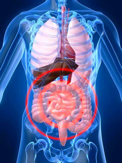 intestino-annessi